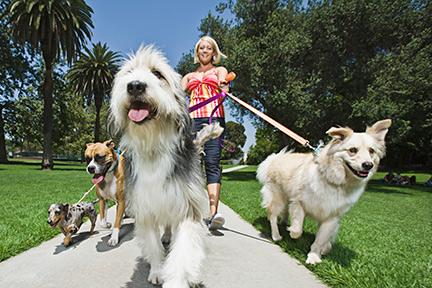 dogs-heatstroke
