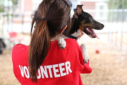 volunteer-wp