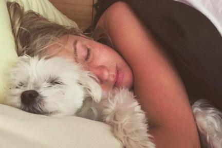 sleepdogbed-wp