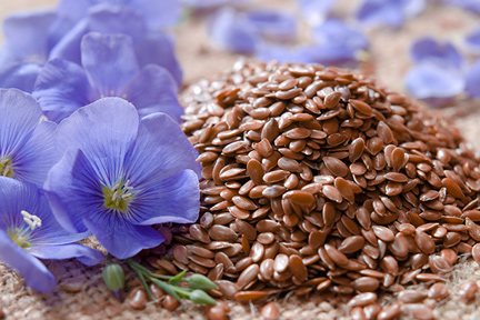 flax-flowers-wp