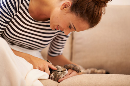 pet-soft-cat-wp