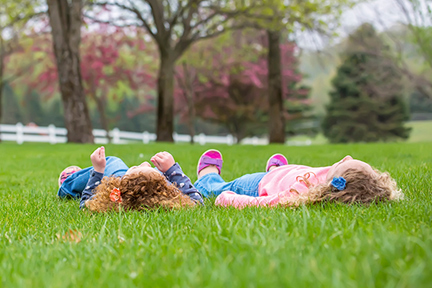 roll-around-grass-yard-wp