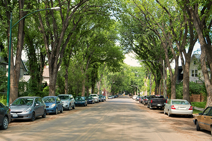 tree-lined-street-wp
