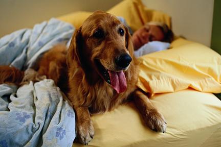 pet-sleep-in-bed-wp