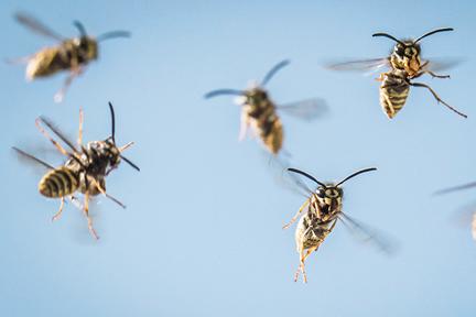 bees-dont-run-wp