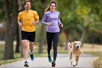 exercise-dog-wp