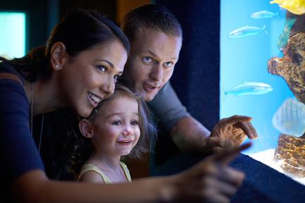 visit-aquarium-wp