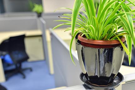 Plant-on-desk-wp