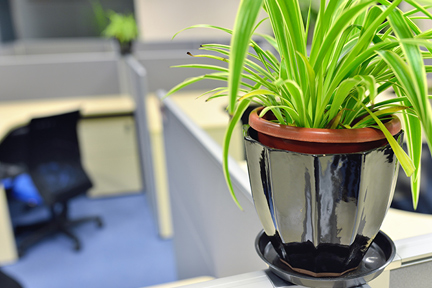 Plant-on-desk-wp