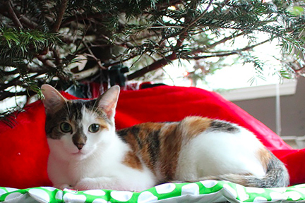 christmas-tree-pets-wp