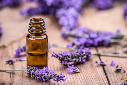 lavender-basil-wp12.21