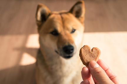 dog-treat-kitchen-overweight-wp