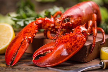 lobster-tomalley-wp