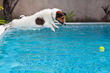 these-dogs-should-not-swim-wp