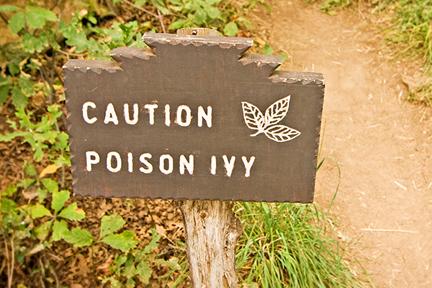 poison-ivy-wp