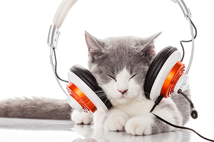 cats-and-music-wp