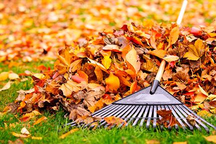 stop-raking-leaves-wp