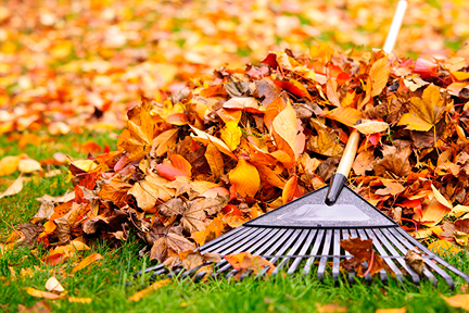 stop-raking-leaves-wp