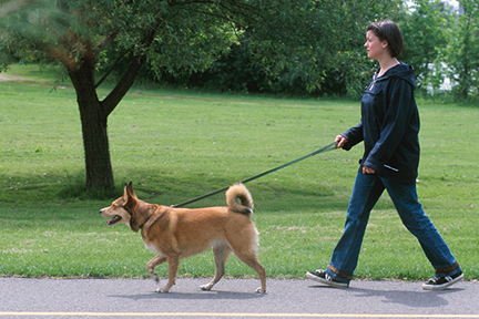 walking-dog-exercise-wp