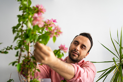 indoor-plants-wp
