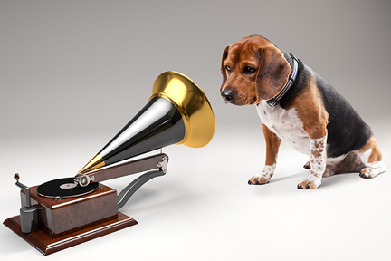 favorite-dog-music-wp